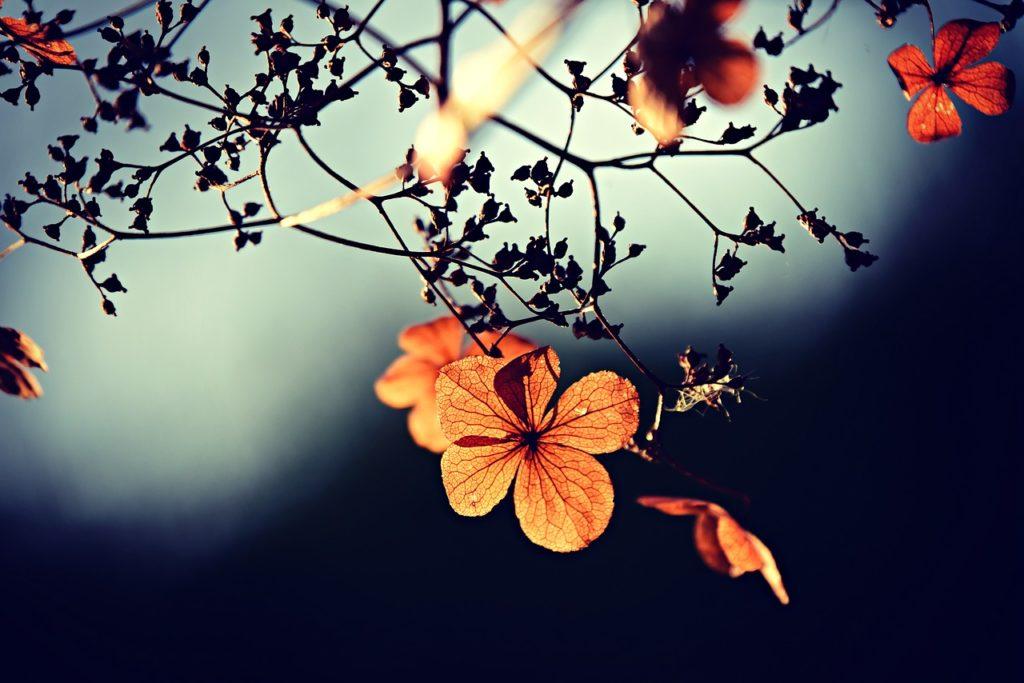 Gesundheitspraxis Oberfranken Licht fällt auf einen Zweig mit Blüten