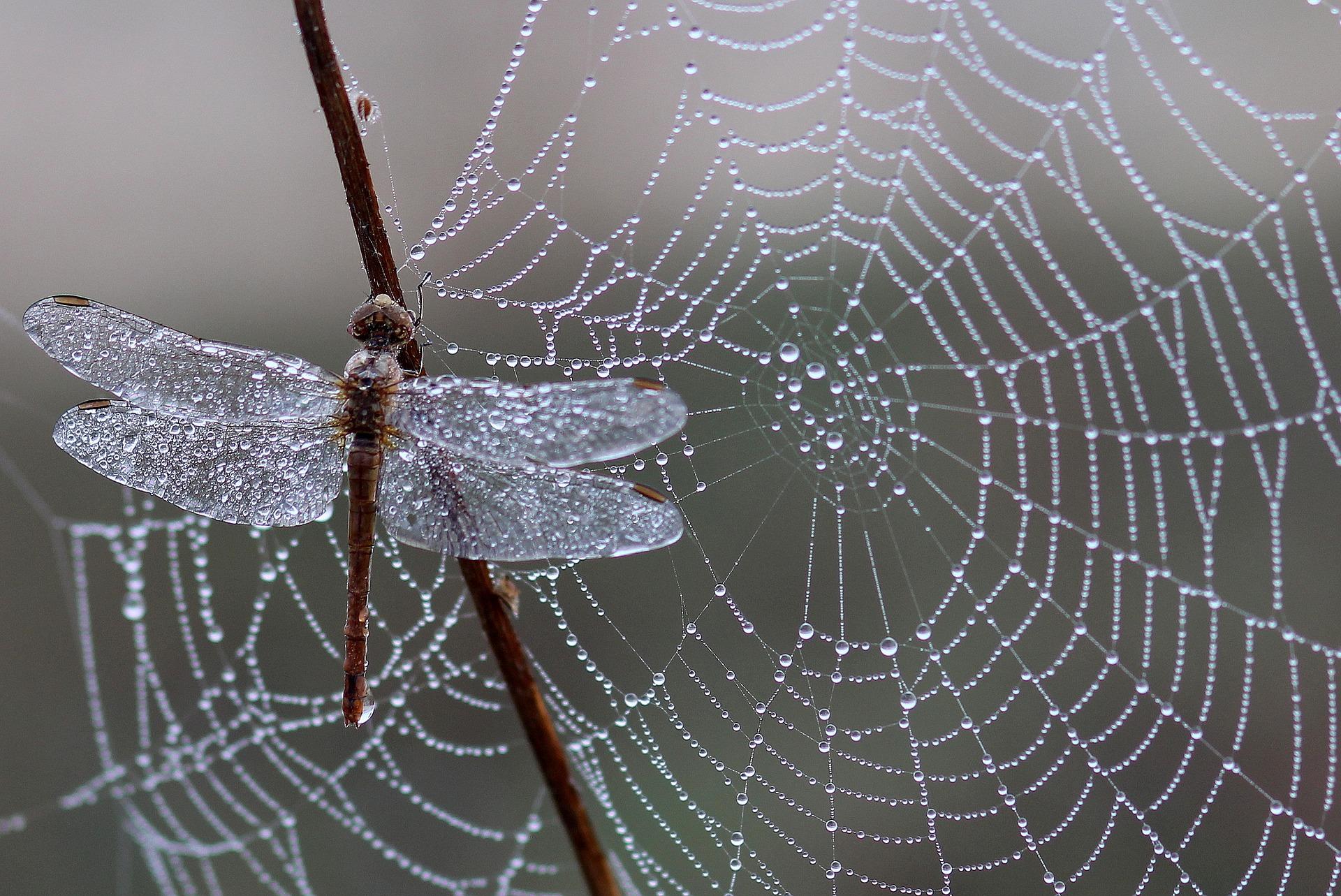 Gesundheitspraxis Oberfranken Die Libelle am Spinnennetz drückt das Thema Achtsamkeit sehr gut aus