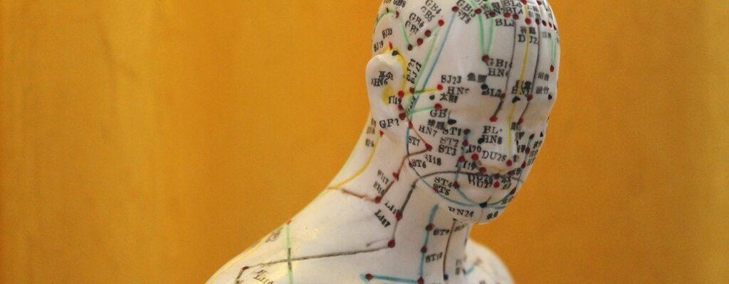 Gesundheitspraxis Oberfranken: Das Bild zeigt ein Modell mit Akupunkten und Meridianlinien aus der TCM